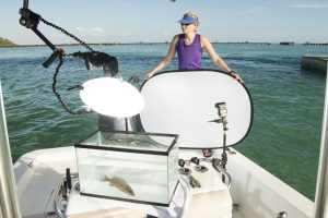 Carrie Fulton holds the white background for the field studio in the boat with a Grey Snapper in the tank.